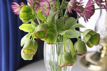 花瓶25IMG_9982