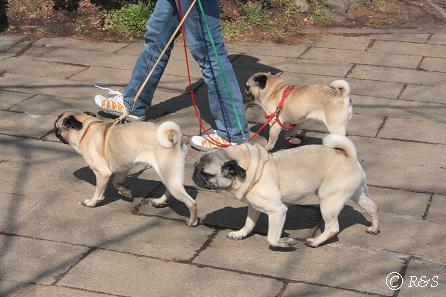 井の頭公園-犬2IMG_8237