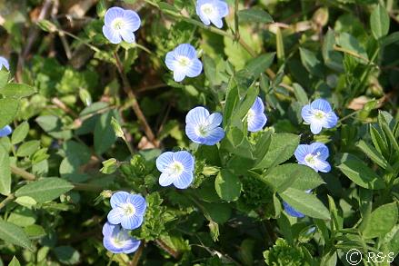 青い草2IMG_8326-1