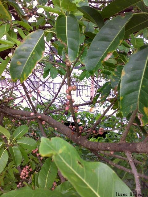 木に生る実