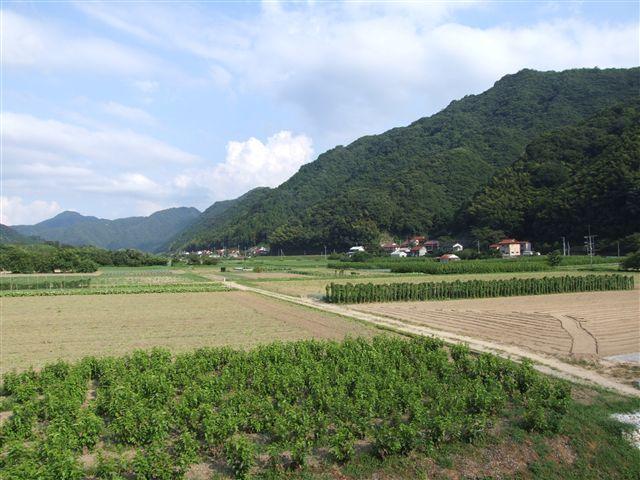2007_0816桜江田津_R
