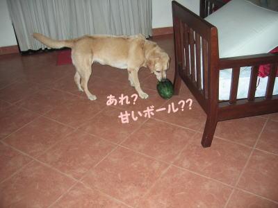 200807027-13.jpg