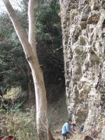 蓮根岩001