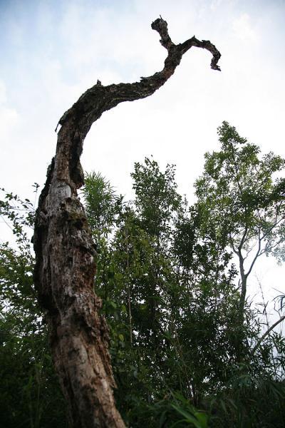 天にそびえる枯れ木