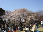 お花見2009②