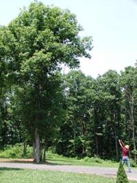 Treeshot1.jpg