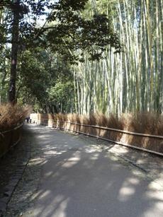 30 竹林