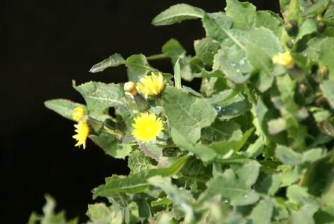 DSC00164花
