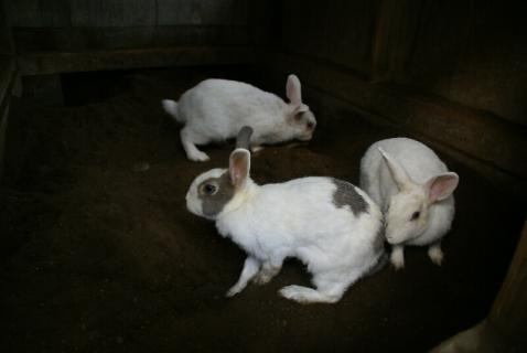 DSC04411ウサギ3