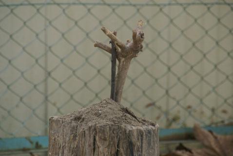 DSC05134木の枝