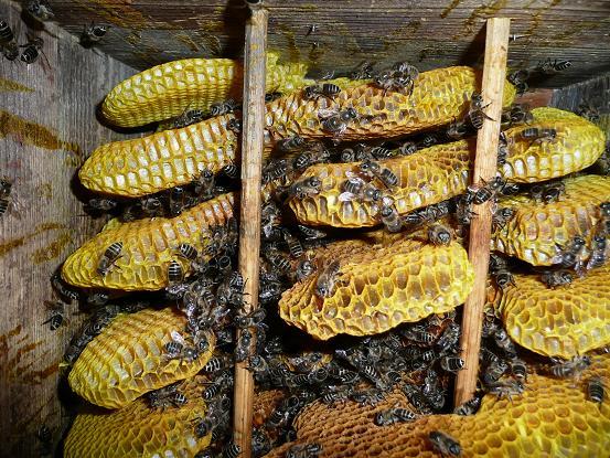 蜂子出し1