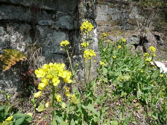 春の庭 006