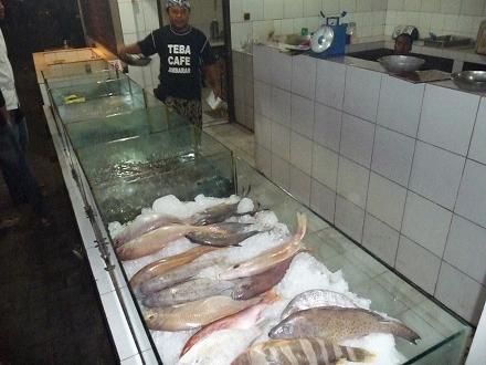 新鮮な魚!