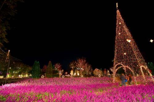 2009 11 07_イルミと花