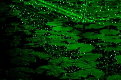 2009 11 07_緑一色A