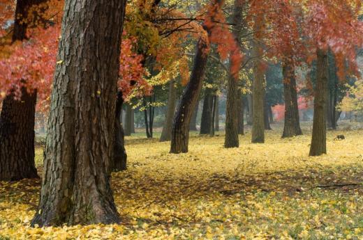 2009 12 03_雨の秋模様_0508