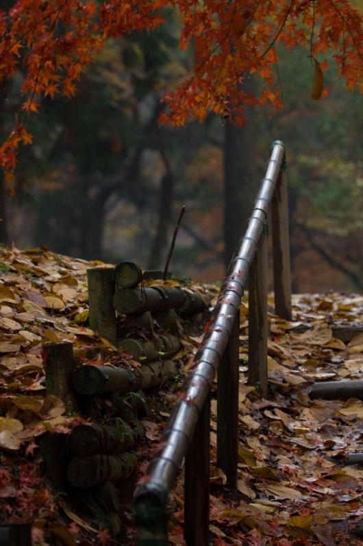 2009 12 03_雨の秋模様_0485+2