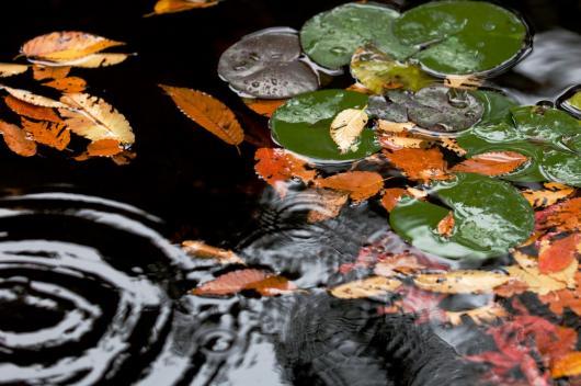 2009 12 03_雨の秋模様_0520