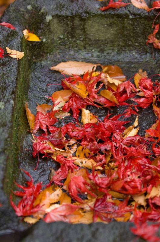 2009 12 03_雨の秋模様_0516+1