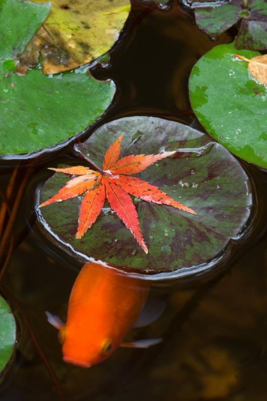 2009 12 05_水彩_0537+1