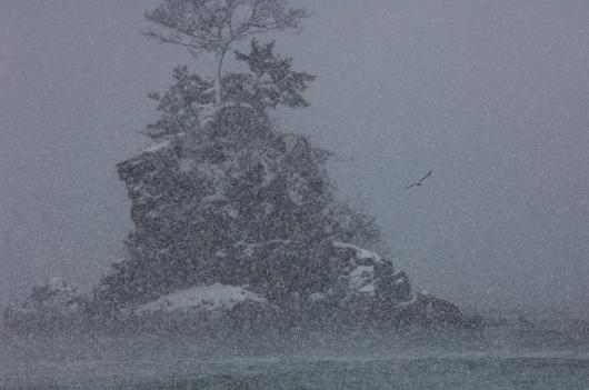 2010 01 01_1049 雨晴海岸 D2x (17) +1