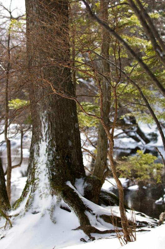 2010 01 17_1201 竜頭の滝~華厳の滝 D2x (60)