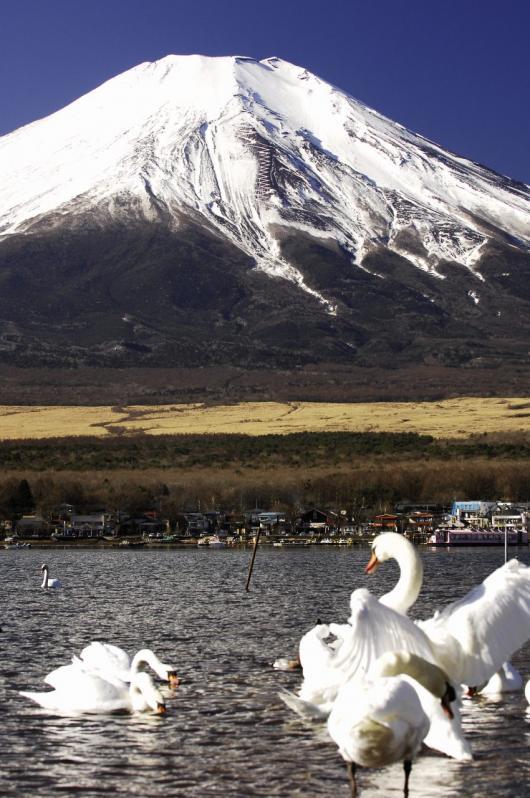 2010 01 24_1371 Mt,Fuji D2x (13)