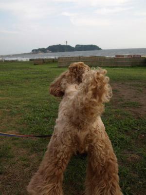 来たぞ!江の島