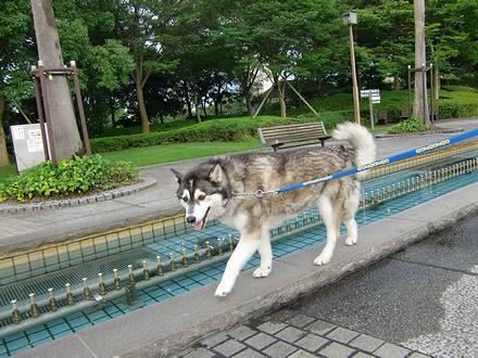 噴水の横を歩く健太