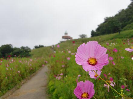 翠波高原第1花園