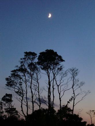 月に手を伸ばす木