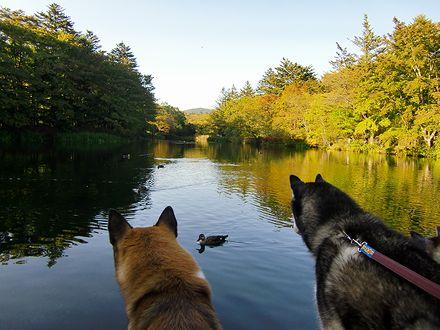 雲場池と鴨を見つめるジョンと北斗