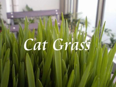 080704猫草