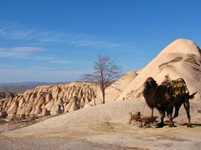 ラクダと岩山