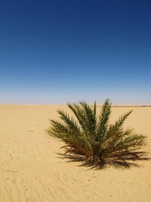 砂の世界②@スィーワ
