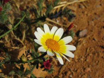 乾いた大地に咲く花①@ティネリール