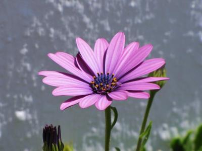 名前の知らない紫色