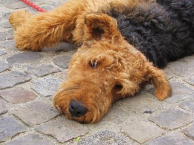 もこもこ犬@サンテミリオン
