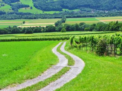 ブドウ畑への道@マイエンフェルト