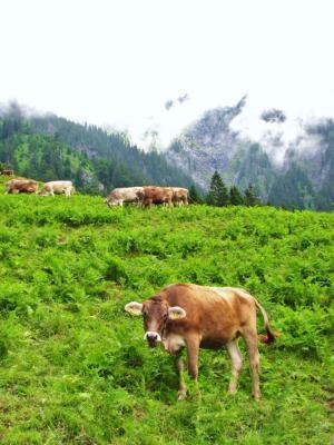 牛さんこんにちは@マイエンフェルト