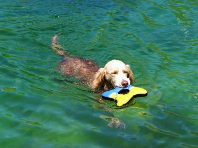 犬も夢中で泳ぐ池