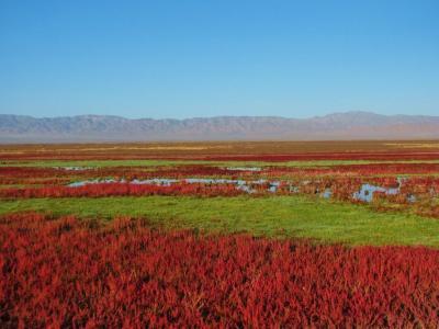 湿原の赤@茶卡