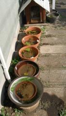 RIMG0庭睡蓮鉢