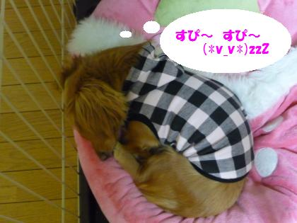 おやすみ~☆