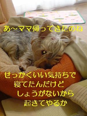 p20081116141919.jpg