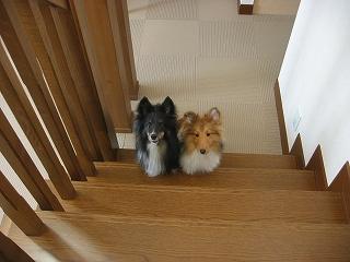 sちゃこ 階段の下で