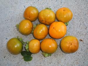 今年の柿は10個だけ