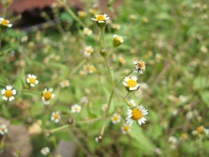 庭の草花05
