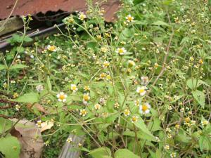 庭の草花04
