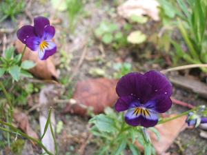 庭の草花01